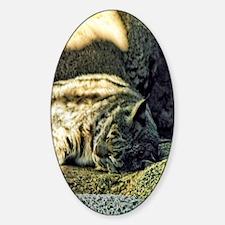 Bobcat Sticker (Oval)