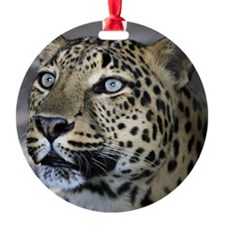 Jett Ornament