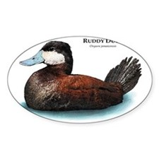 Ruddy Duck Decal