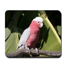 Rose Breasted Cockatoo Mousepad