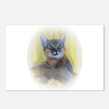 Abyssinian Cat Photo Postcards (Package of 8)