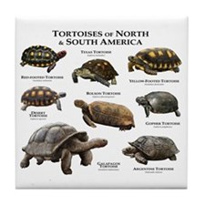 Tortoises of North and South America Tile Coaster