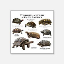 "Tortoises of North and Sout Square Sticker 3"" x 3"""