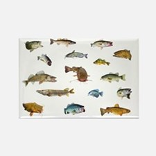 All fish 3 Rectangle Magnet