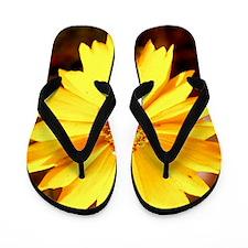 Tranqility Flip Flops