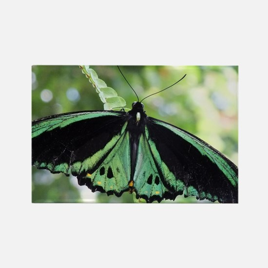 Green Butterfly Rectangle Magnet