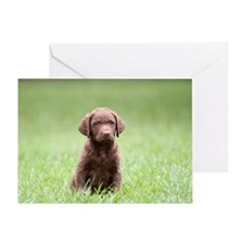 Chesapeake Bay Retriever Puppy Greeting Card
