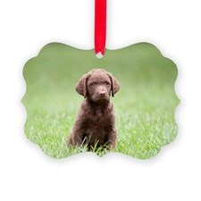 Chesapeake Bay Retriever Puppy Ornament