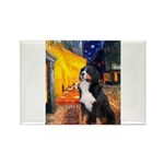 Cafe & Bernese Rectangle Magnet (10 pack)