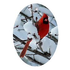 Snow Cardinal Oval Ornament
