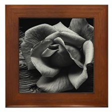 Ansel Adams Rose And Driftwood Framed Tile