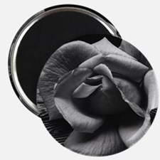 Ansel Adams Rose And Driftwood Magnet
