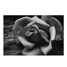 Ansel Adams Rose And Drif Postcards (Package of 8)