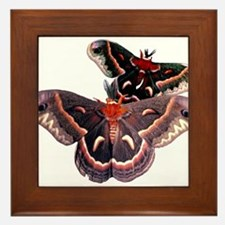 Cercropia Moth Framed Tile