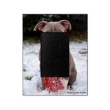 Pit bull Picture Frames