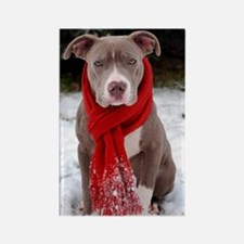 Holiday Pit Bull with Red Scarf Rectangle Magnet