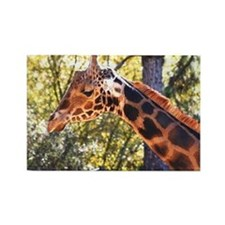 Baringo Giraffe Rectangle Magnet