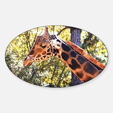 Baringo Giraffe Decal