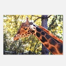 Baringo Giraffe Postcards (Package of 8)