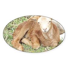 Newborn Lamb Decal