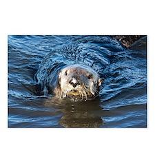 Alaska Sea Otter Postcards (Package of 8)