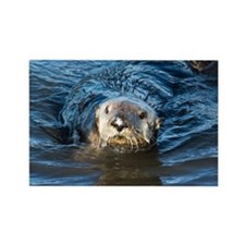 Alaska Sea Otter Rectangle Magnet