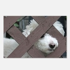bichon Postcards (Package of 8)
