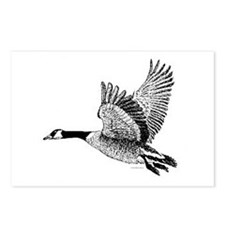 Canadian Goose Postcards (Package of 8)