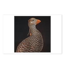 Heath Hen (Tympanuchus cupido cupido) Postcards (P