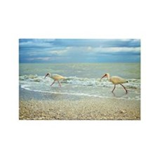 Sanibel Ibis Birds Strut Their st Rectangle Magnet