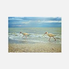 Sanibel Ibis Birds Strut Their st Rectangle Magnet