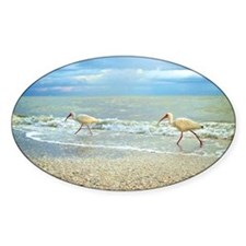 Sanibel Ibis Birds Strut Their stuf Decal