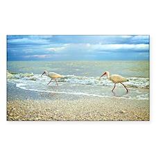 Sanibel Ibis Birds Strut Their Decal