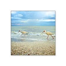 "Sanibel Ibis Birds Strut Th Square Sticker 3"" x 3"""