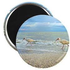 Sanibel Ibis Birds Strut Their stuff Magnet
