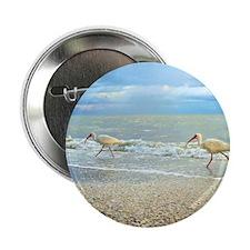 """Sanibel Ibis Birds Strut Their stuff 2.25"""" Button"""