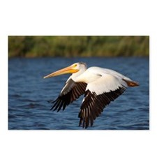 Pelican tree Postcards (Package of 8)