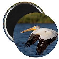 Pelican tree Magnet