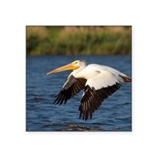 "Pelican tree Square Sticker 3"" x 3"""