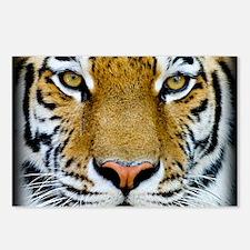 Big Cat Tiger Roar Postcards (Package of 8)