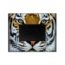 Big Cat Tiger Roar Picture Frame