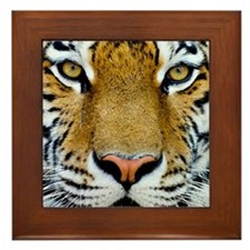 Big Cat Tiger Roar Framed Tile