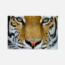 Big Cat Tiger Roar Rectangle Magnet