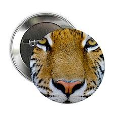 "Big Cat Tiger Roar 2.25"" Button"
