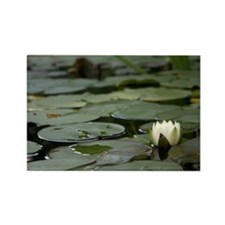 Lily Pad Rectangle Magnet