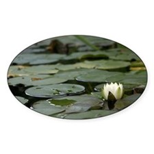 Lily Pad Decal