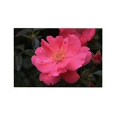 Pink Rose with water droplets Rectangle Magnet