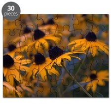 Yellow Daisys Puzzle