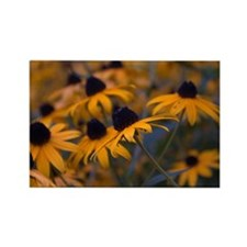Yellow Daisys Rectangle Magnet