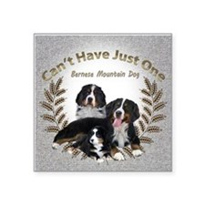 "Bernese Mt. Dog Cant Have J Square Sticker 3"" x 3"""